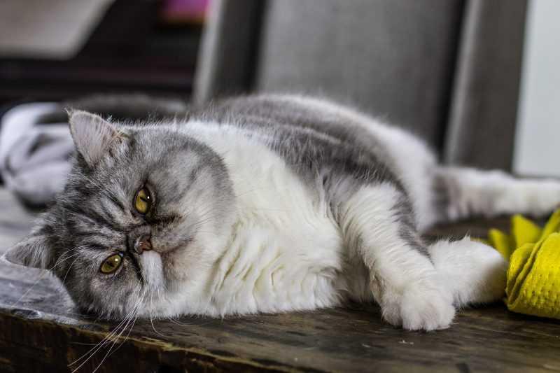 cat-2022341_1920