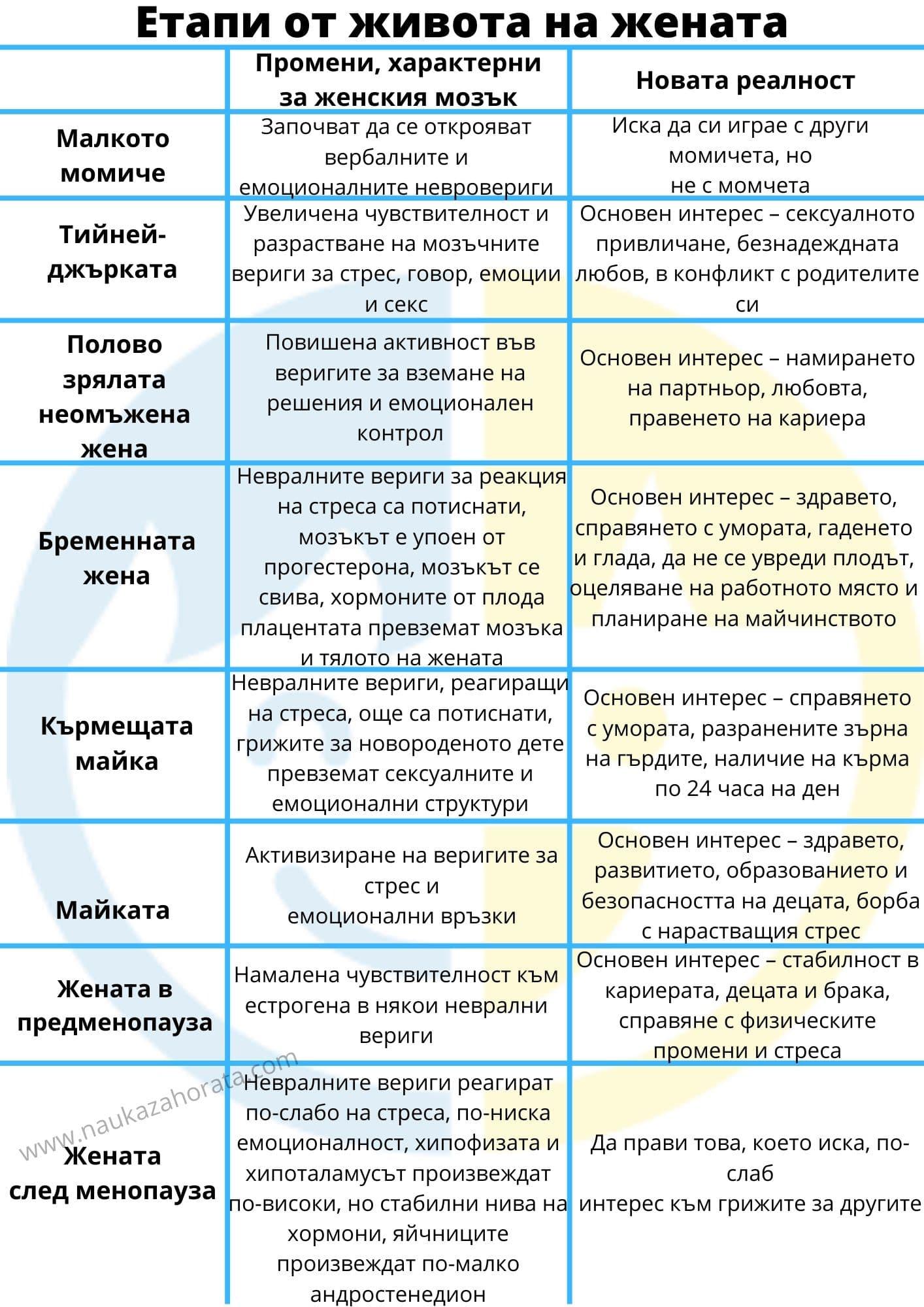 женският мозък етапи на развитие