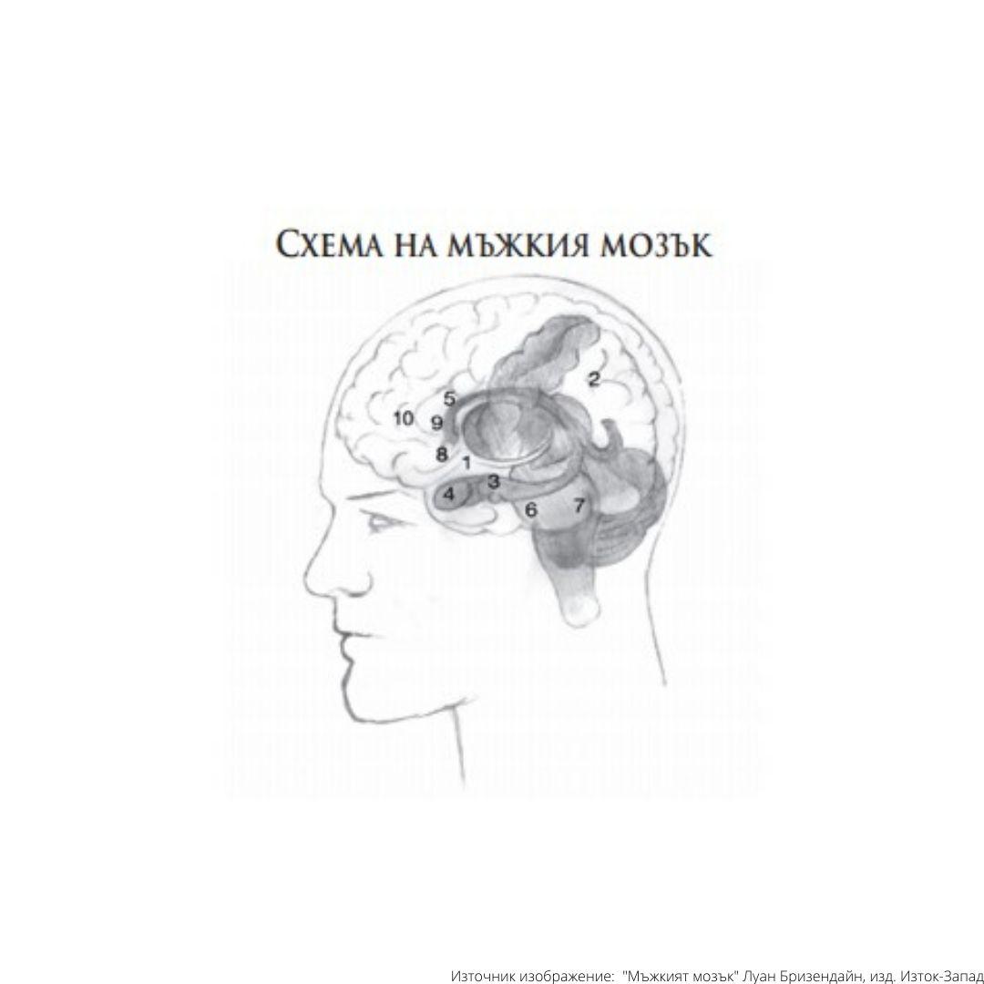 мъжкият мозък карта